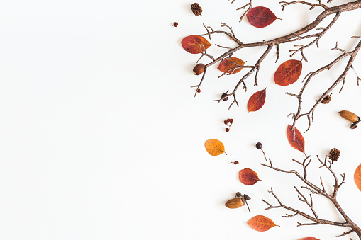 Autumn dried leaves on white background. Flat lay, top view