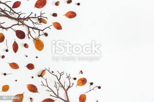 istock Autumn dried leaves on white background. Flat lay, top view 997118504