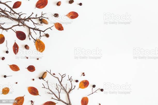 Autumn dried leaves on white background flat lay top view picture id997118504?b=1&k=6&m=997118504&s=612x612&h=xewbghotlaw 3 bfhwtrv bfiy7vx6qupmvvnhoxvzu=