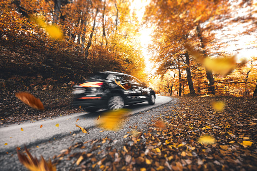 Driving in pure autumn conditions. Colorful leaves are falling from the trees.