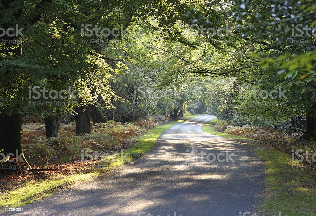 Autumn Drive royalty-free stock photo