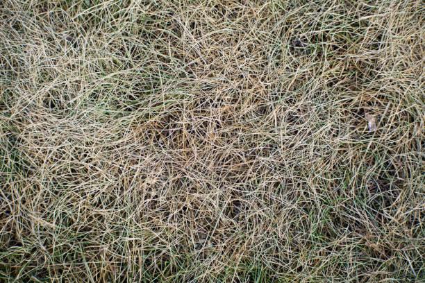 herbst trockenes gras - strohdach stock-fotos und bilder