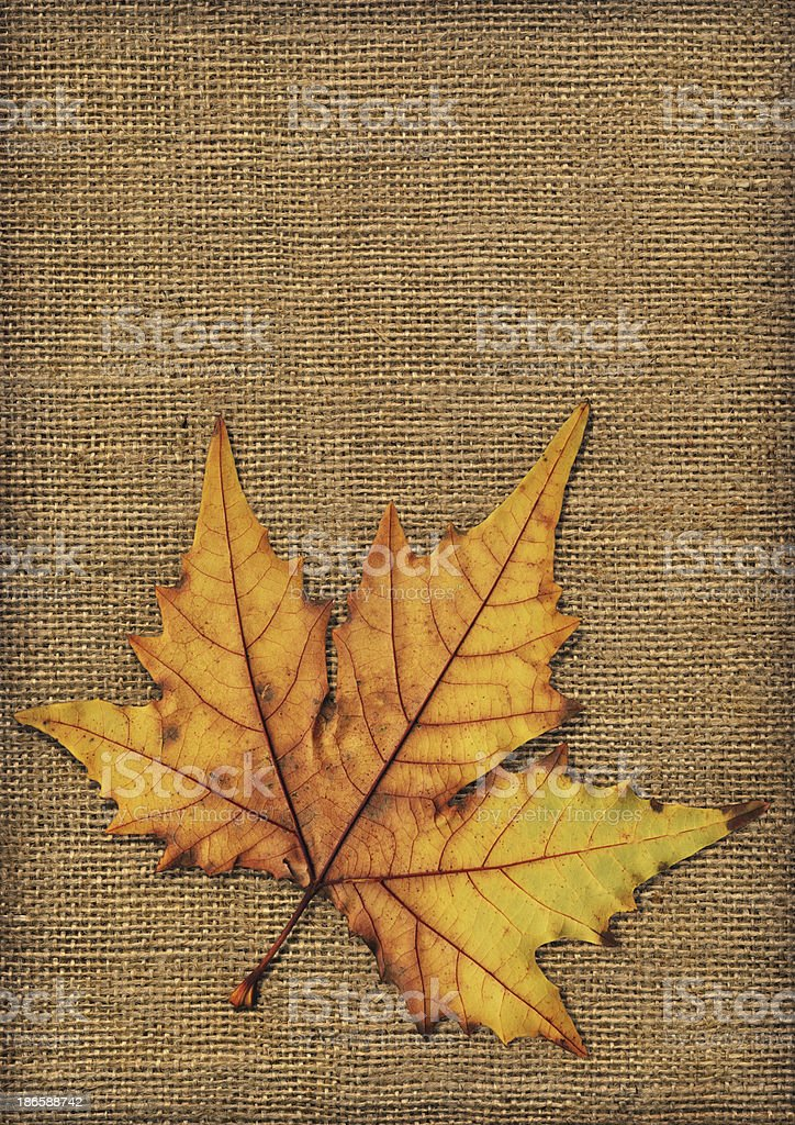 Autumn Dry Maple Leaf Isolated on Burlap Vignette Grunge Texture royalty-free stock photo
