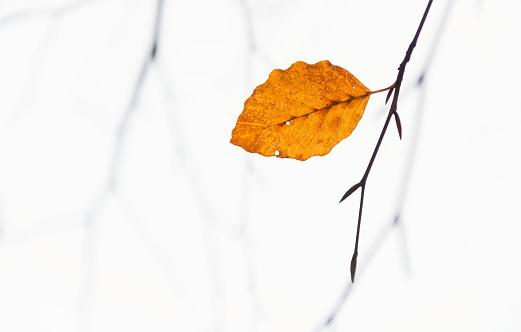 Autumn ending soon