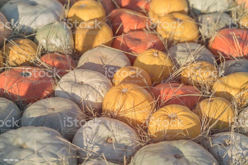 Autumn Fall achtergrond met rijpe verschillende biologische pumpkins op droge stro. Oogst concept. Symbool voor Thanksgiving Day - Royalty-free Archiefbeelden Stockfoto