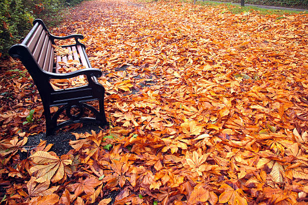 Autumn / Fall Bench stock photo