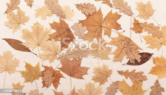 Autumn fall flat lay concept, thanksgiving day. Yellow leaf.