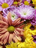 Autumn / fall floral arrangement background with mums and daisies