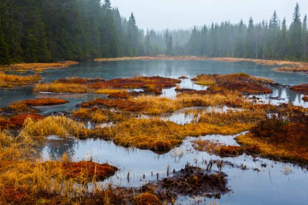 Herbst-Herbst Wald Oslo Norwegen – Foto