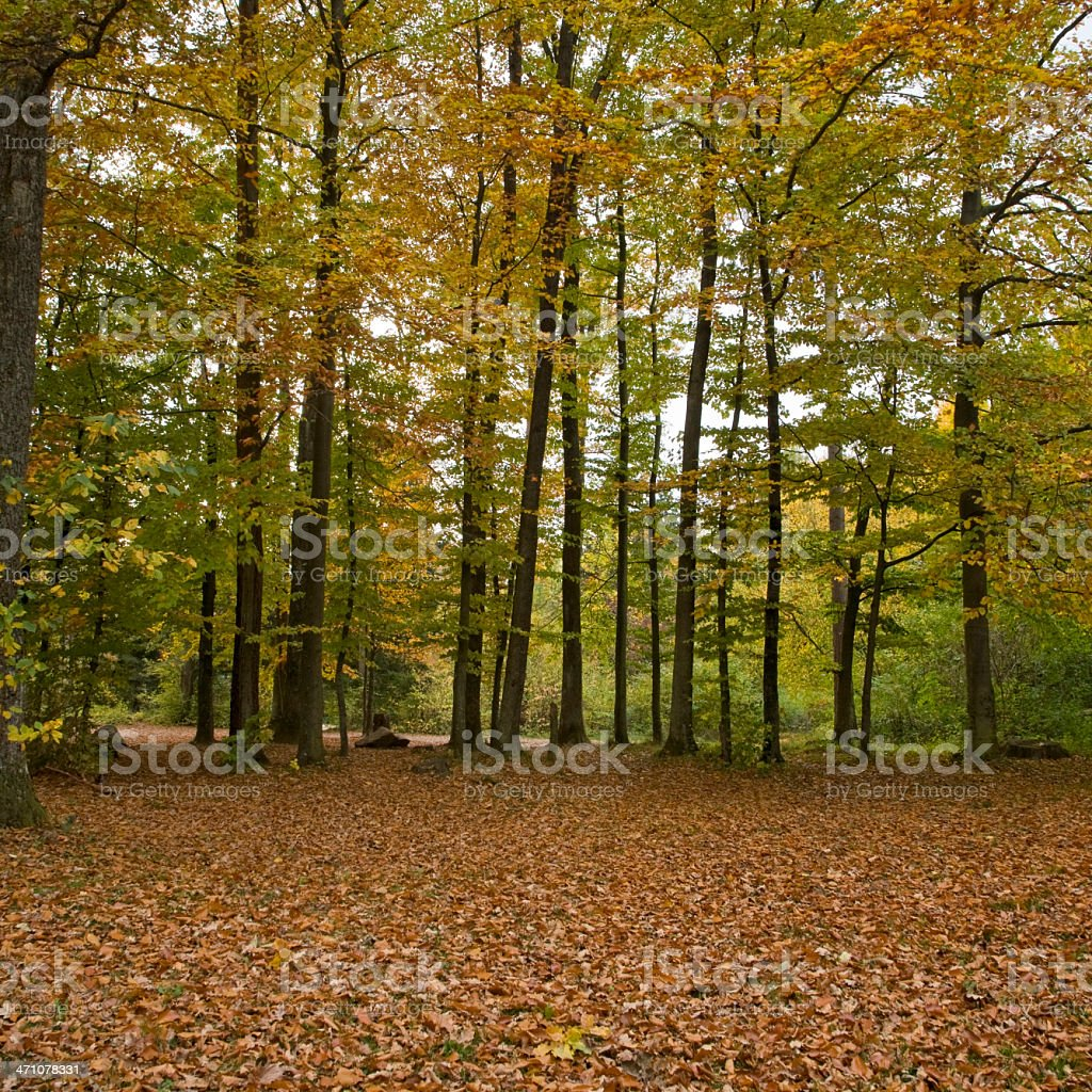 Autumn Fall Forest royalty-free stock photo