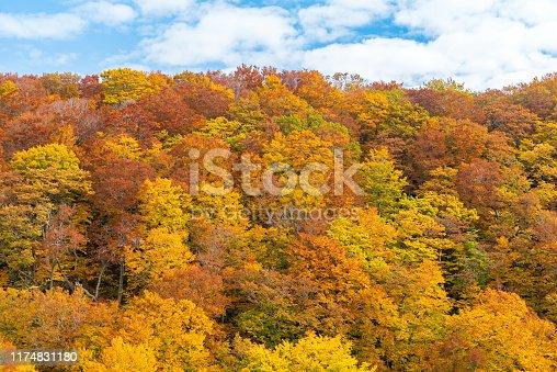 Autumn Fall Landscape of Forest and woods around Jogakura Ohashi Bridge in Aomori Tohoku Japan