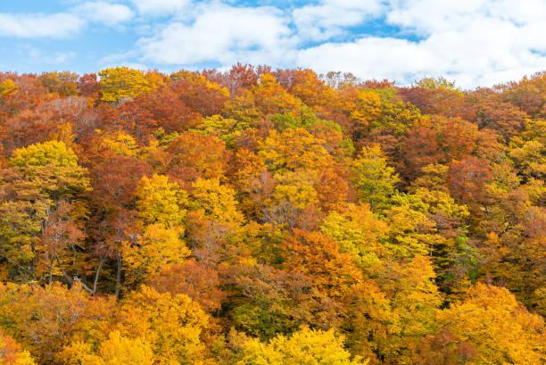 autumn fall forest tohoku japan - deciduous stock pictures, royalty-free photos & images