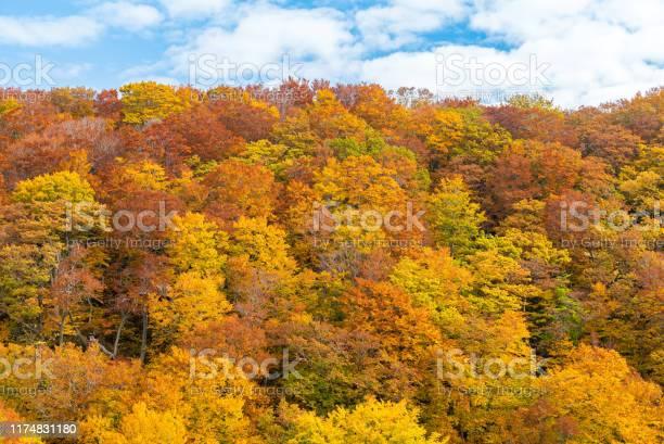 Photo of Autumn Fall Forest Tohoku Japan