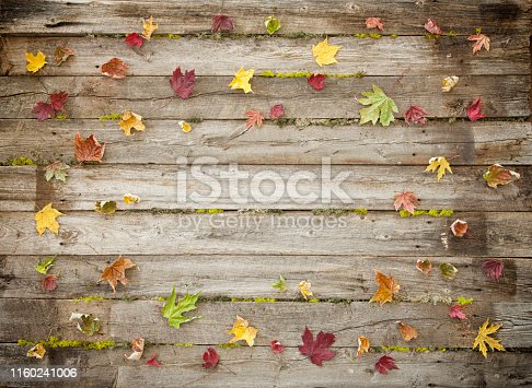 Autumn fall leaf background on old distressed wood