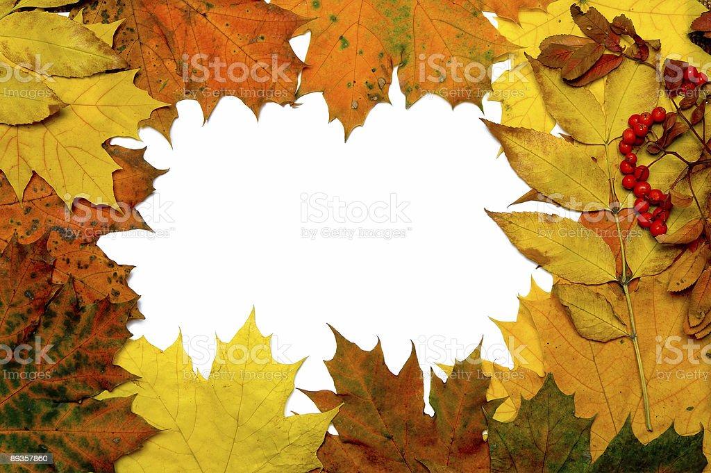 Jesień Liść ramki zbiór zdjęć royalty-free