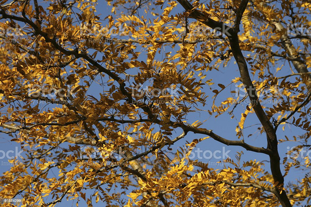 Autumn Fall Leaves royalty-free stock photo