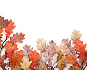 Autumn fall oak leaves isolated on white