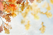 Autumn fall oak leaves on a textured background