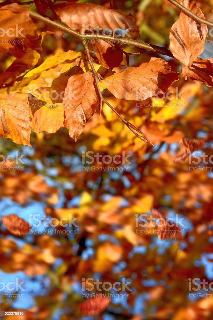Jesień zbiór zdjęć royalty-free