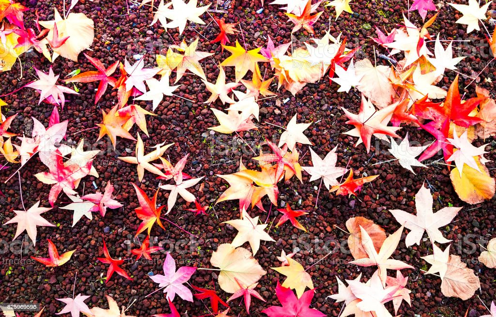 Autumn fall red leaves stock photo