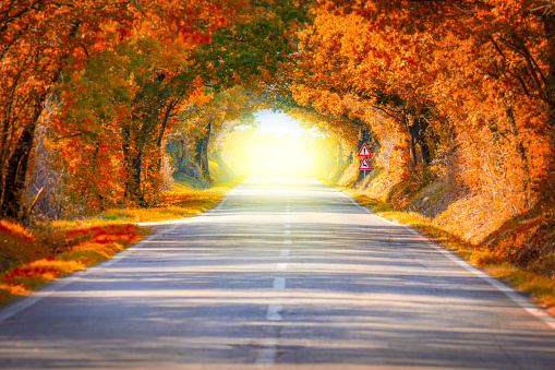 istock Autumn Fall Road landscape - trees tunne and magic light 601147160