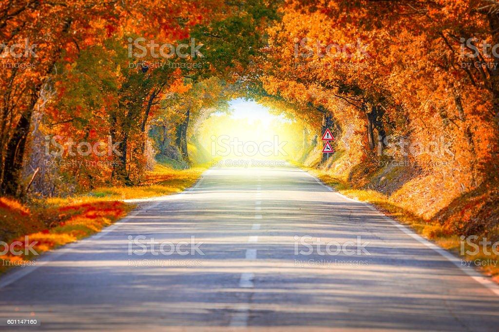 Autumn Fall Road landscape - trees tunne and magic light stock photo