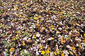 色鮮やかな葉と青の秋秋空の感謝祭ハロウィーン