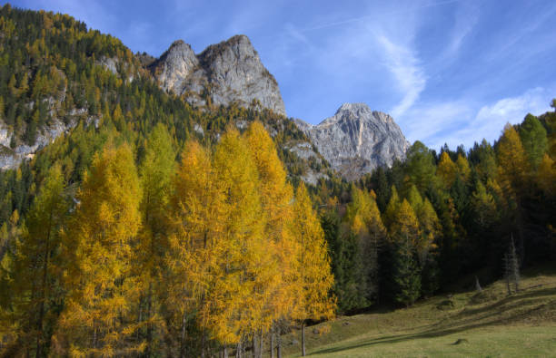 herbst fantasy - colorado tanne stock-fotos und bilder