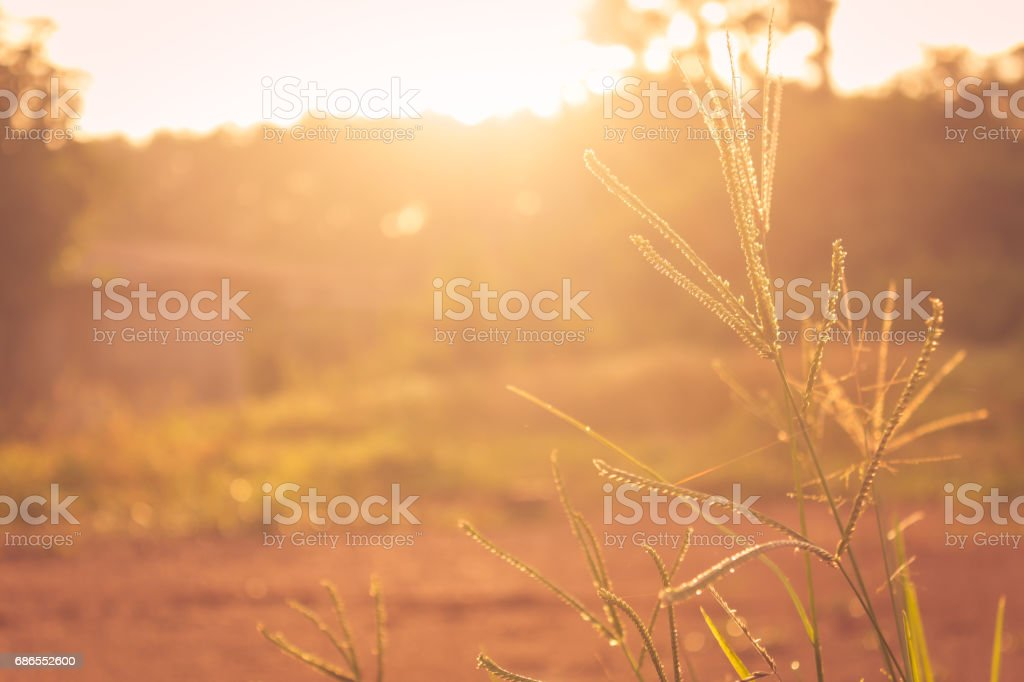 Autumn farmhouse at countryside at sunrise royalty free stockfoto