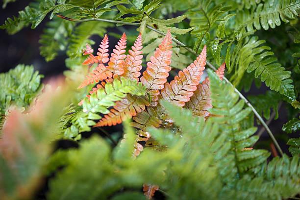 Autumn Fern stock photo