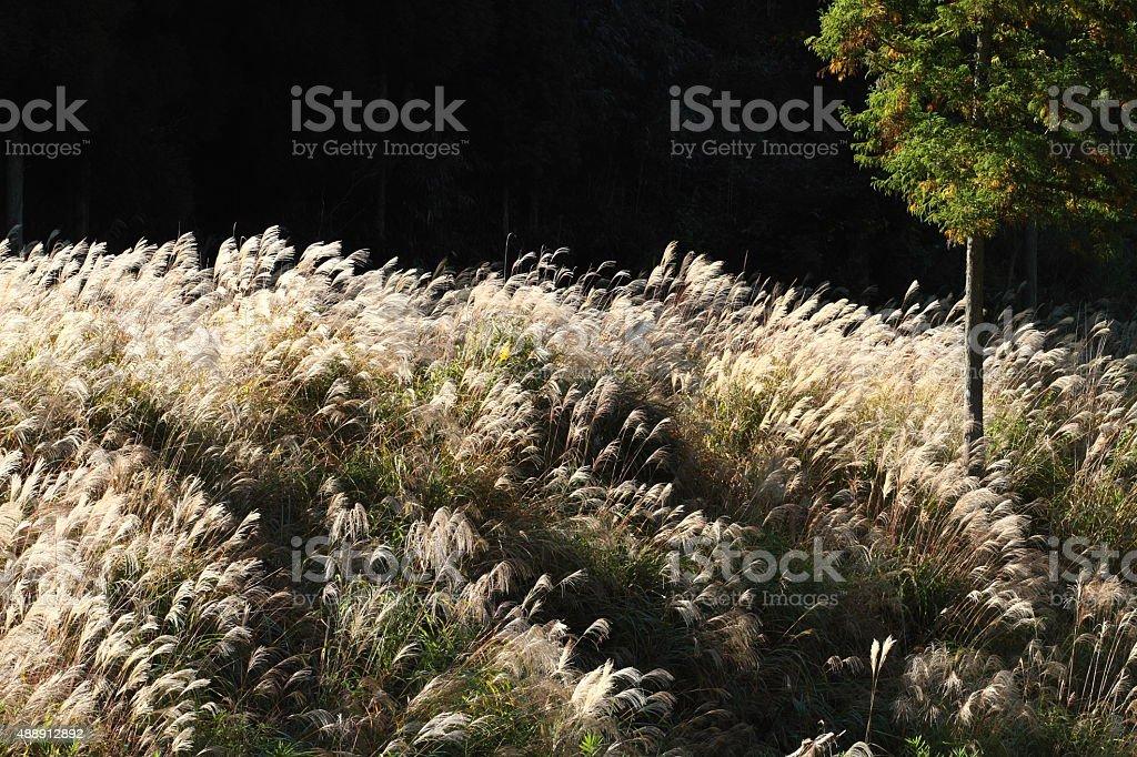 秋のフィールド ストックフォト