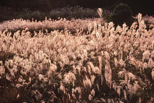 秋のフィールド - 2015年のストックフォトや画像を多数ご用意