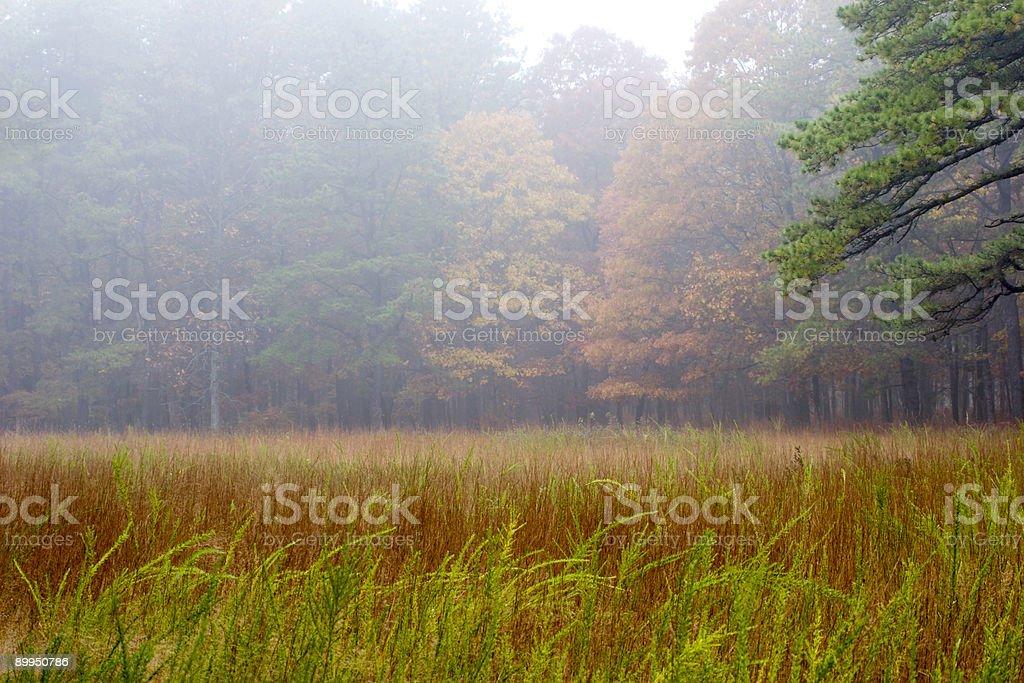 Autumn Field royalty-free stock photo