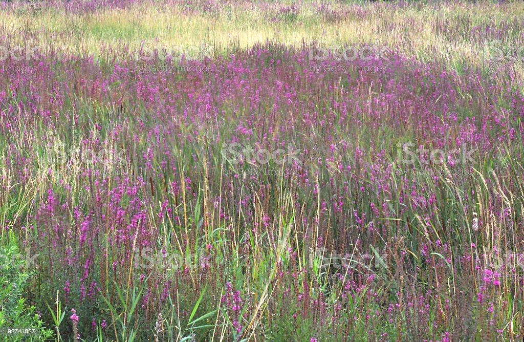 Herbst Field. Lizenzfreies stock-foto