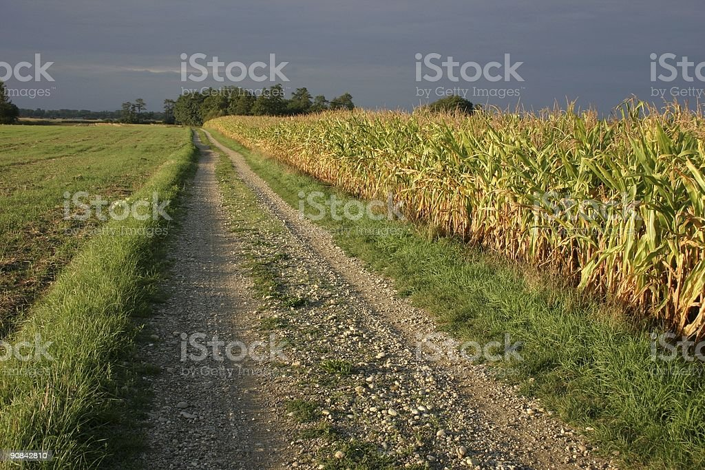autumn fields and path royalty-free stock photo