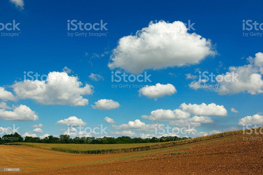 Autumn Fields royalty-free stock photo