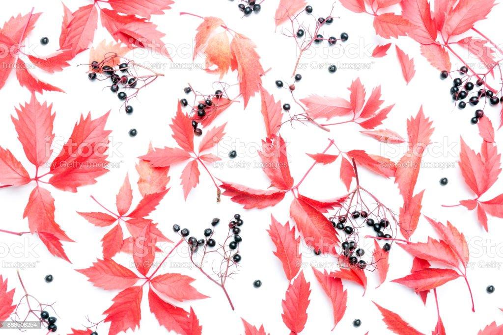 Autumn floral background stock photo