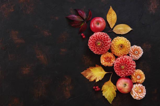 Padrão de outono Floral com dálias, maçãs e Outono folhas de fundo escuro vintage. Vista de cima, close-up, um lugar para texto. - foto de acervo