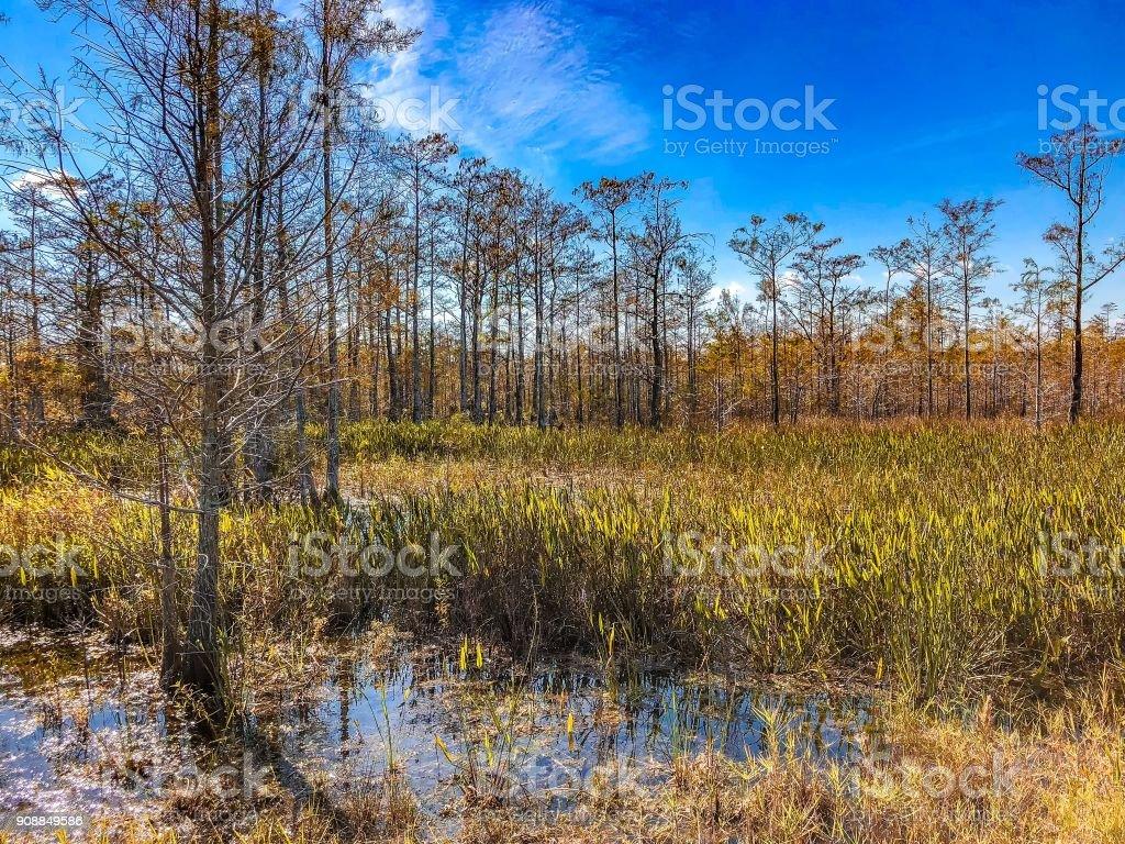 Autumn Florida Swamp stock photo