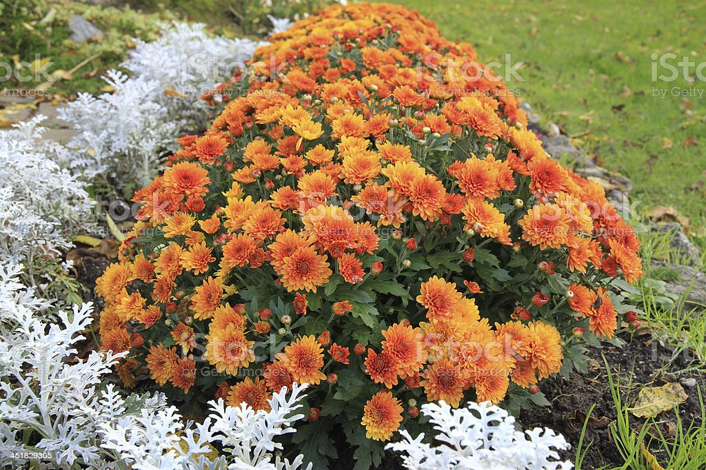 Autumn Flowers In A Rockgarden Ontario Canada Stock Photo ...