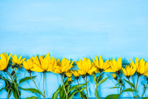herbstblumen auf hölzernen hintergrund. herbst-ernte der heilpflanze mit gelben blumen, essbare topinambur. - herbst hochzeitseinladungen stock-fotos und bilder