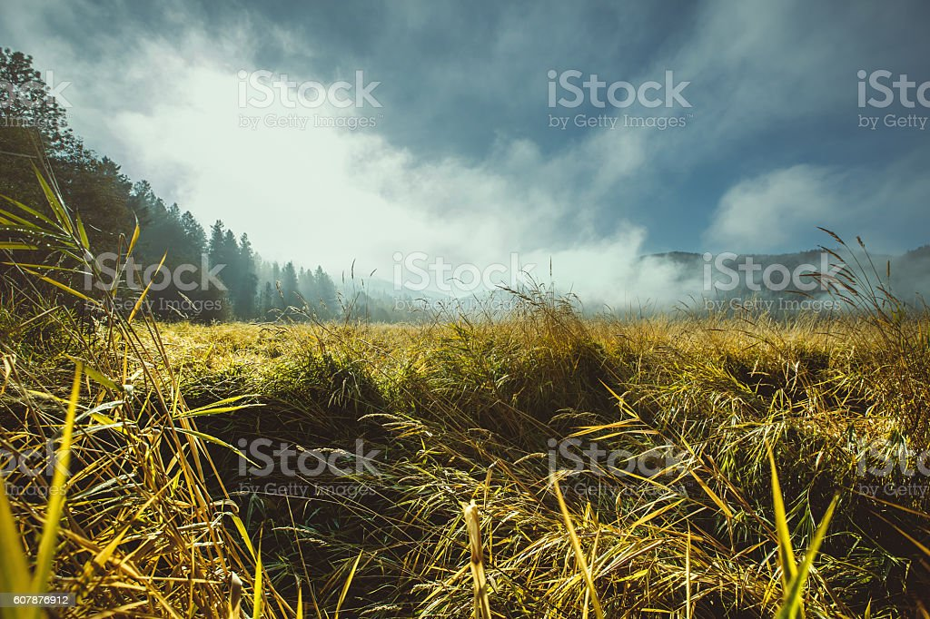 Autumn fog at the edge of the forest over the grassland. stock photo