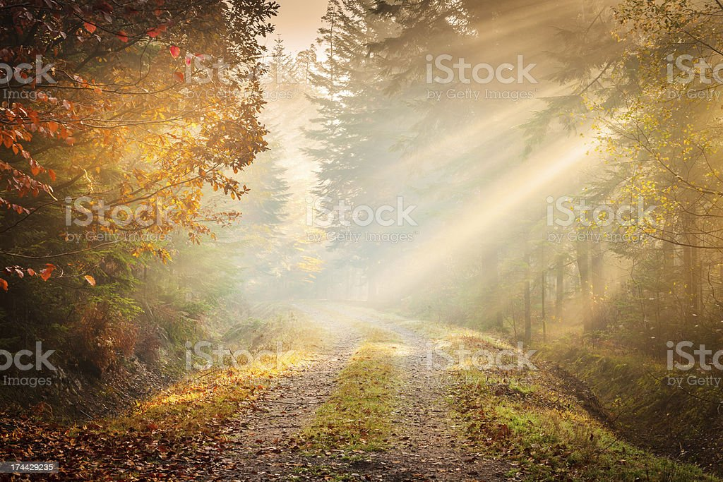 Autumn Fog - Fairytale Road winding through the Forest royalty-free stock photo
