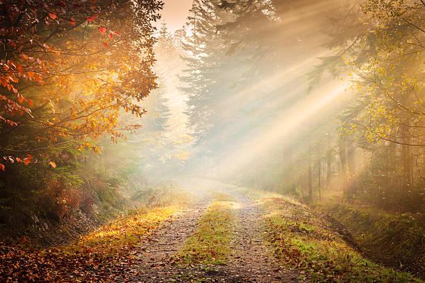 Autumn Fog - Fairytale Road winding through the Forest stock photo