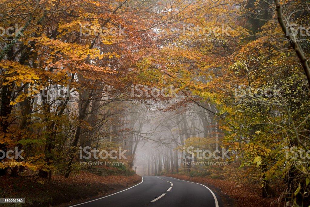 Autumn Fog stock photo