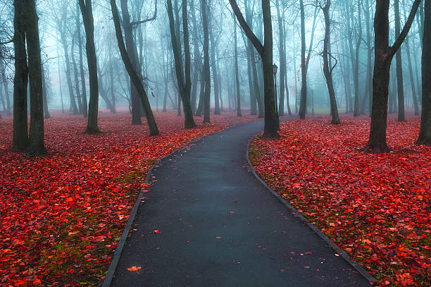 Autumn foggy alley - colorful autumn landscape view stock photo