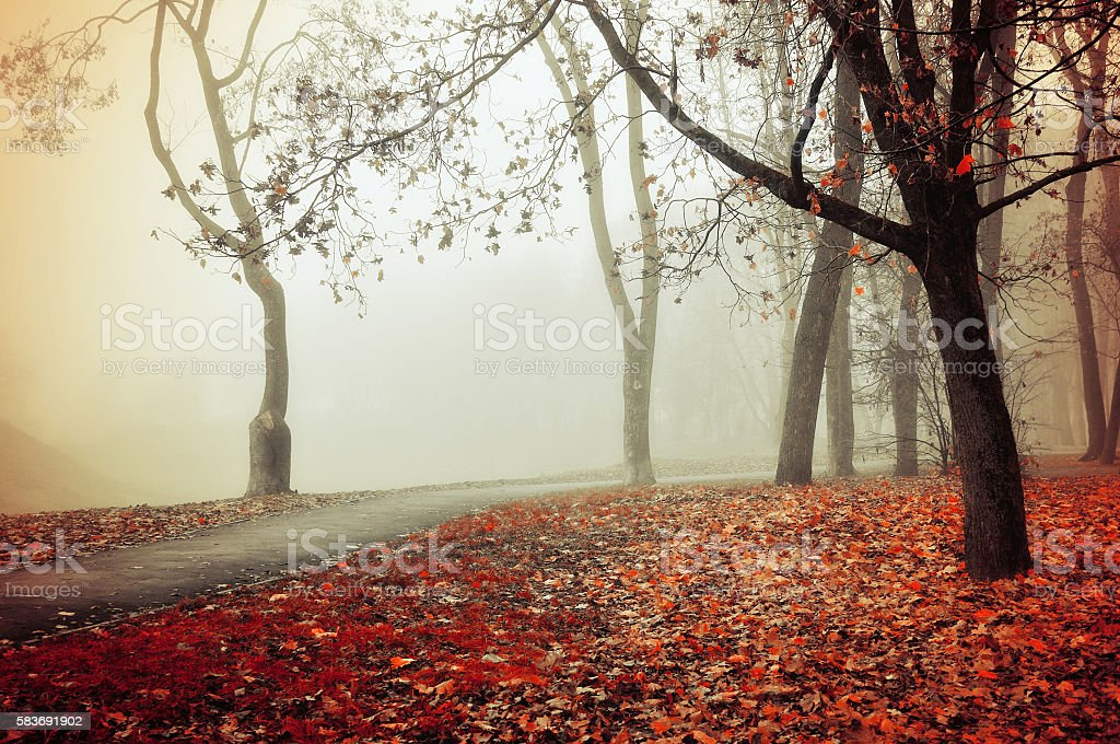 Autumn foggy alley - park autumn landscape stock photo