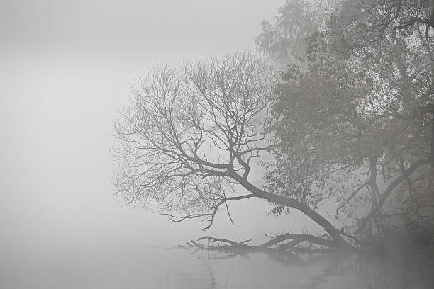 autumn foggy morning. dawn on the misty river - ruhe grau stock-fotos und bilder
