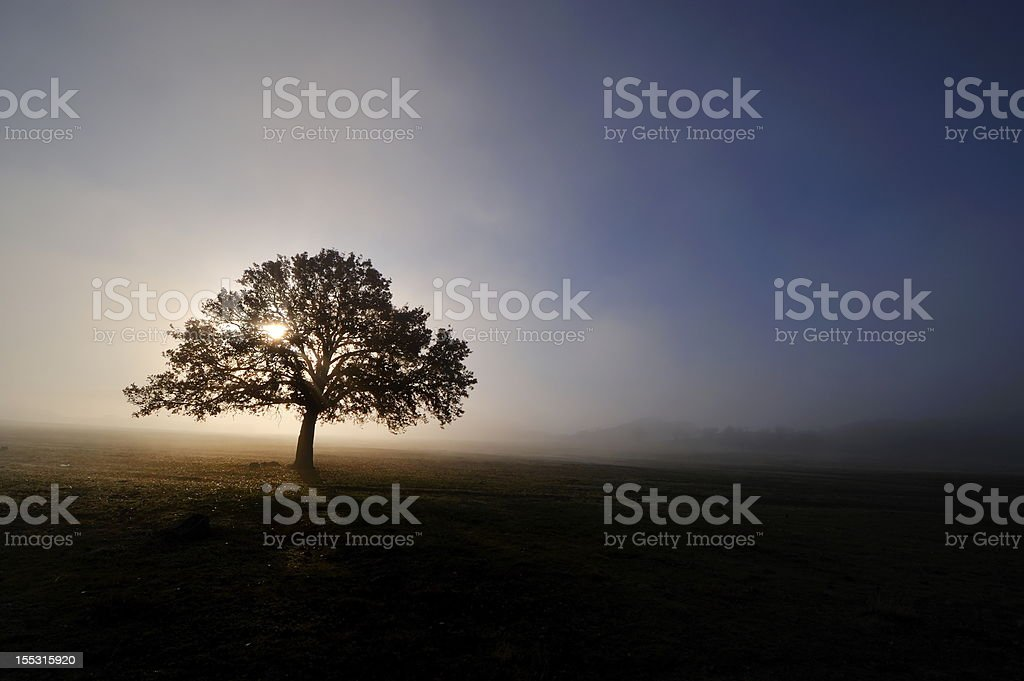 autumn foggy morning royalty-free stock photo