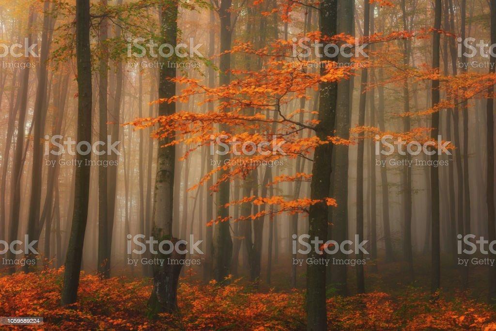 Nebel mystisch Herbstwald, helle Farben Natur Hintergrund fallen – Foto